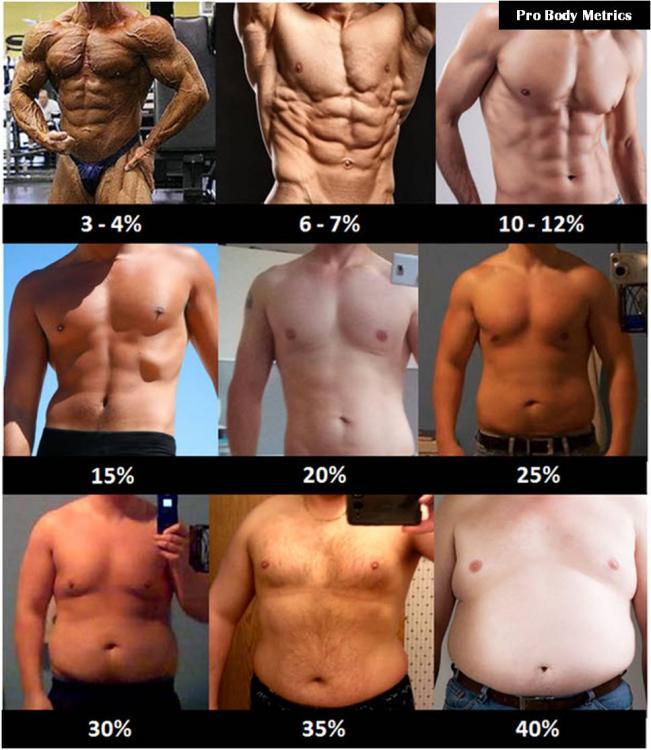Men+Fat.jpg