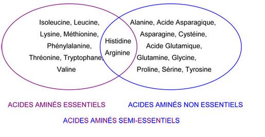 acides-amins.jpg
